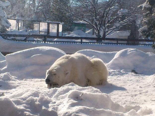Short trip from Sapporo – Asahiyama Zoo –