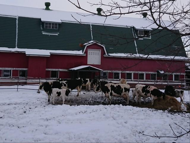 What to wear in Hokkaido in winter (Jan to Feb)